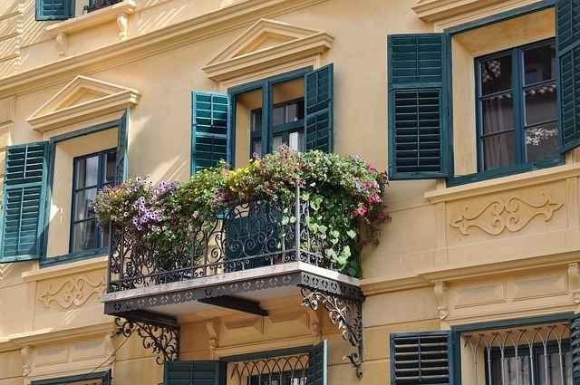 Ein ausgewachsener Baum auf dem Balkon