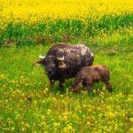 Beteiligung von Naturschutzverbänden bei der Beeinträchtigungen von FFH-Gebieten