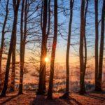 Haftung nach dem Umweltschadensgesetz - und das Verschulden des Gutachters