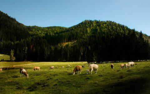Überlassung landwirtschaftlicher Flächen für naturschutzrechtlicher Ausgleichsmaßnahmen