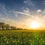 Der Windpark und die Schwarzstörche
