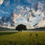 Treibhausgasemissionszertifikate