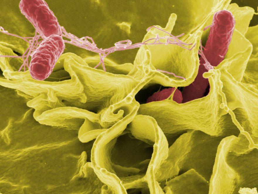 Positiver Salmonellenbefall bei der Eigenkontrolle