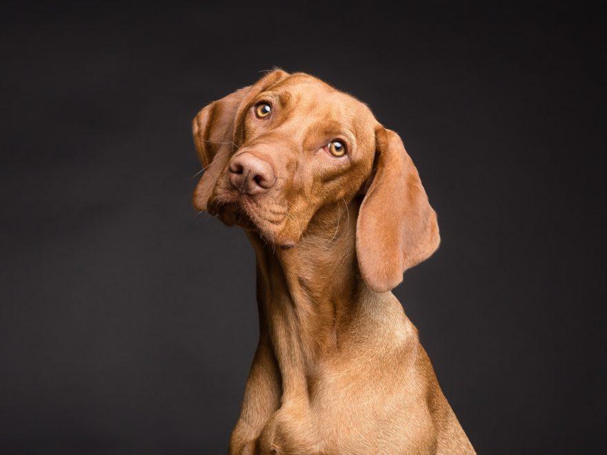Zu wem darf der Hund bei der Trennung?