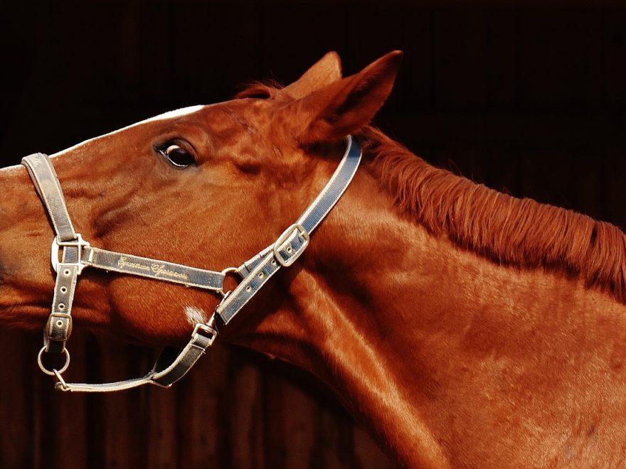 """Die Versteigerung eines """"nicht mehr neuen"""" Pferdes - und die Gewährleistungsfrist"""