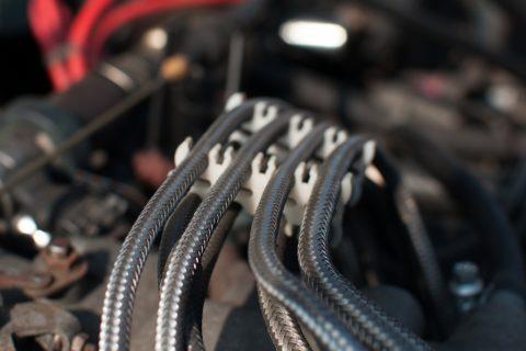 Verbissschäden am Fahrzeug - und der Versicherungsschutz