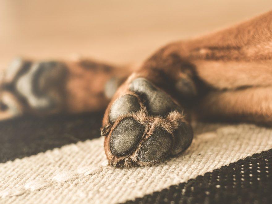 Schulhund – steuerlich absetzbar