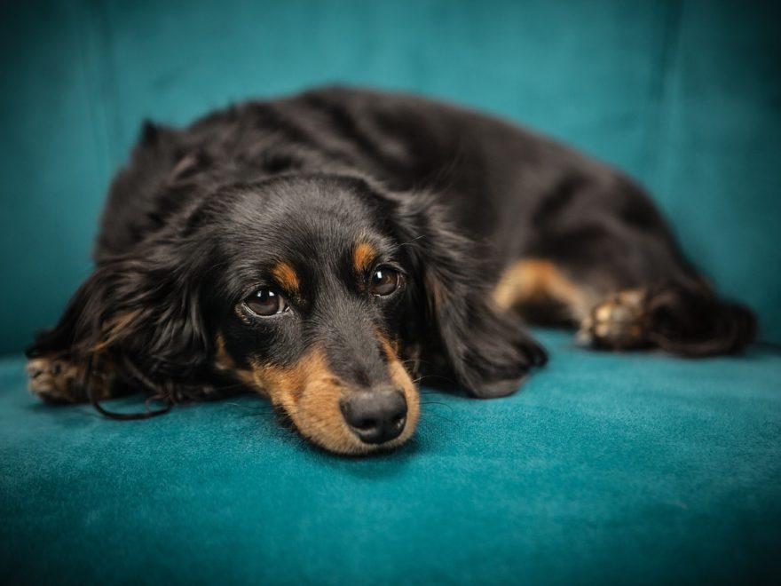 Die Genehmigung zur Hundeshaltung in der Mietwohnung