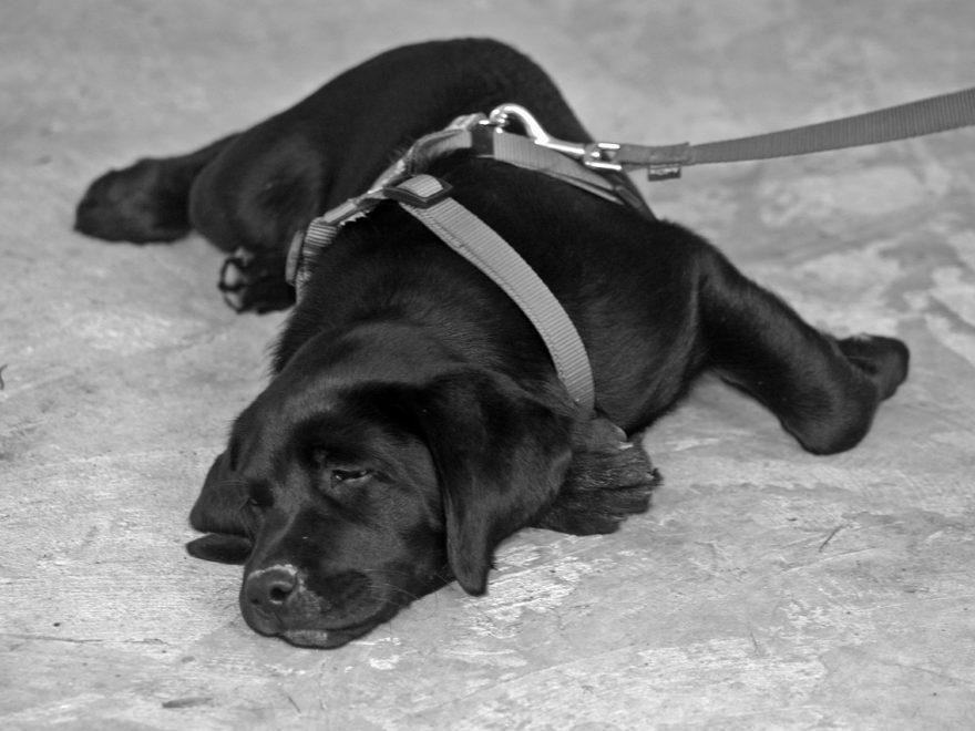Hund ohne Leine – und die Anstiftung zur Falschaussage