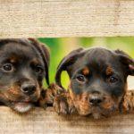 Der Hundebiss am Hundestrand