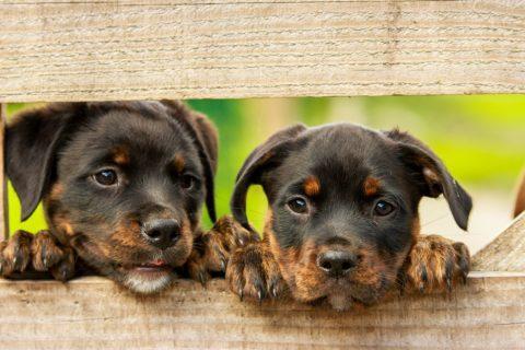 Die Tierschutzorganisation - und ihre Verbandsklageberechtigung