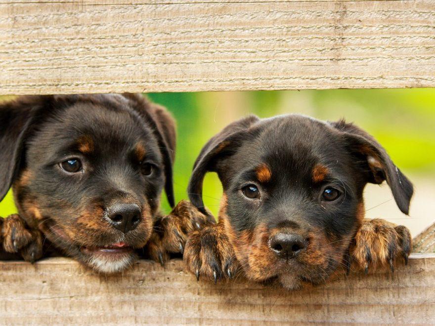Gebühren für Mitteilung an das zentrale Hundehalterregister  - und die Mehrwertsteuer