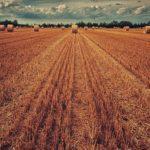 Die unentgeltliche Übertragung eines verpachteten land- und fortwirtschaftlichen Betriebs - und der Vorbehaltsnießbrauch