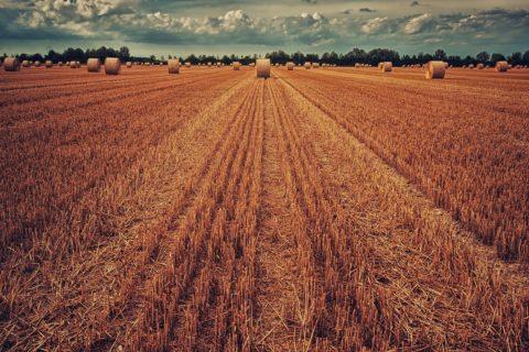 Landwirtschaftliche Bodennutzung im Naturschutzgebiet