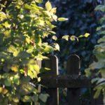 Rückschnitt eines Grenzbaums - und die Klage nur gegen einen Nachbarn