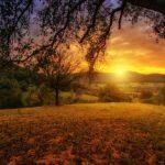 Zurückschneiden herüberragender Äste - und die Verjährung