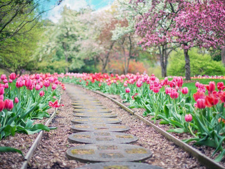 Pflanzenlieferungen für eine Gartenanlage