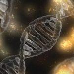 Die Ergebnisse eines DNA-Gutachtens - und ihre Darstellung in den Urteilsgründen