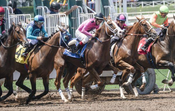 Sportwettensteuer auf Pferderennwetten eines ausländischen Veranstalters