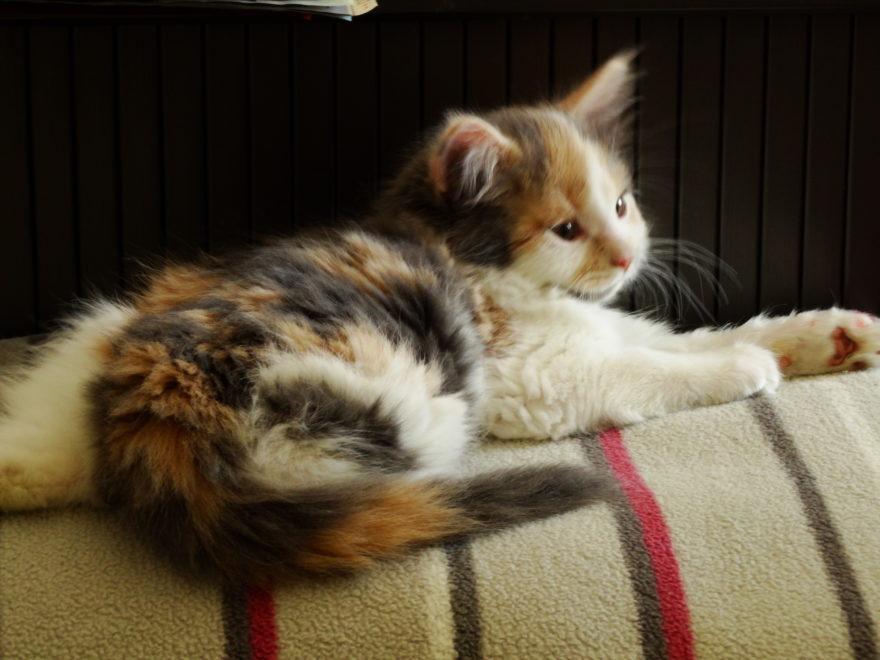 Fütterung von Streunerkatzen - und der Versicherungsschutz