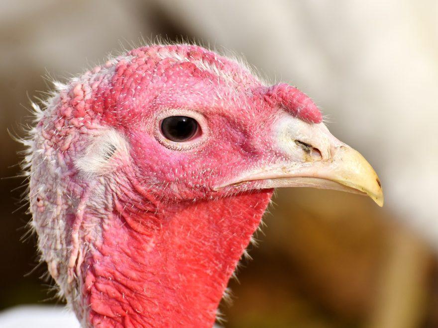 Aufsichtsmaßnahmen bei Tiertransporten – und der Auskunftsanspruch des Tierschutzvereins