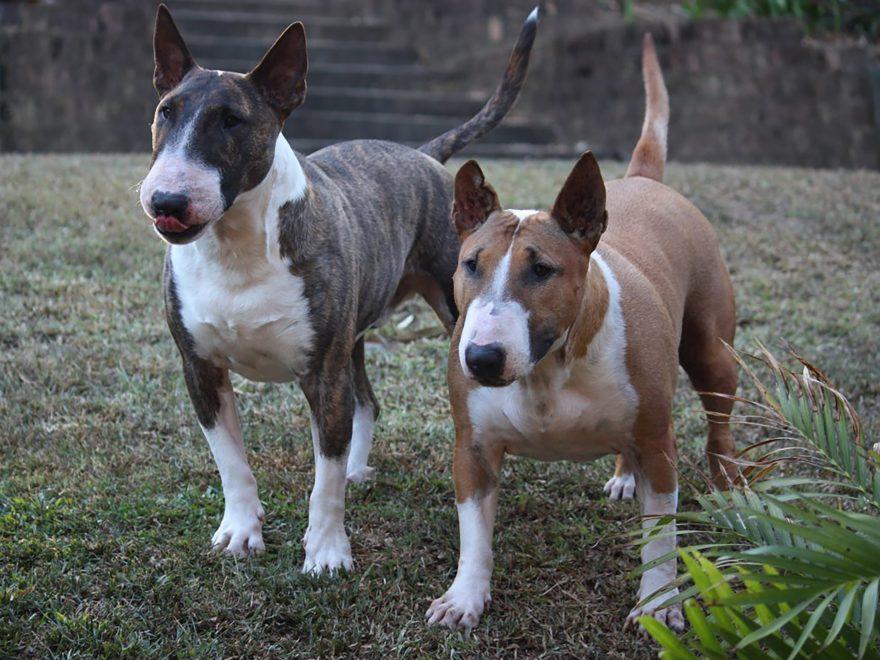 Der im Tierheim untergebrachte Problemhund - und  die Spendenbescheinigung
