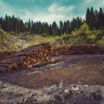 Holzlieferverträge - und das europäische Beihilferecht