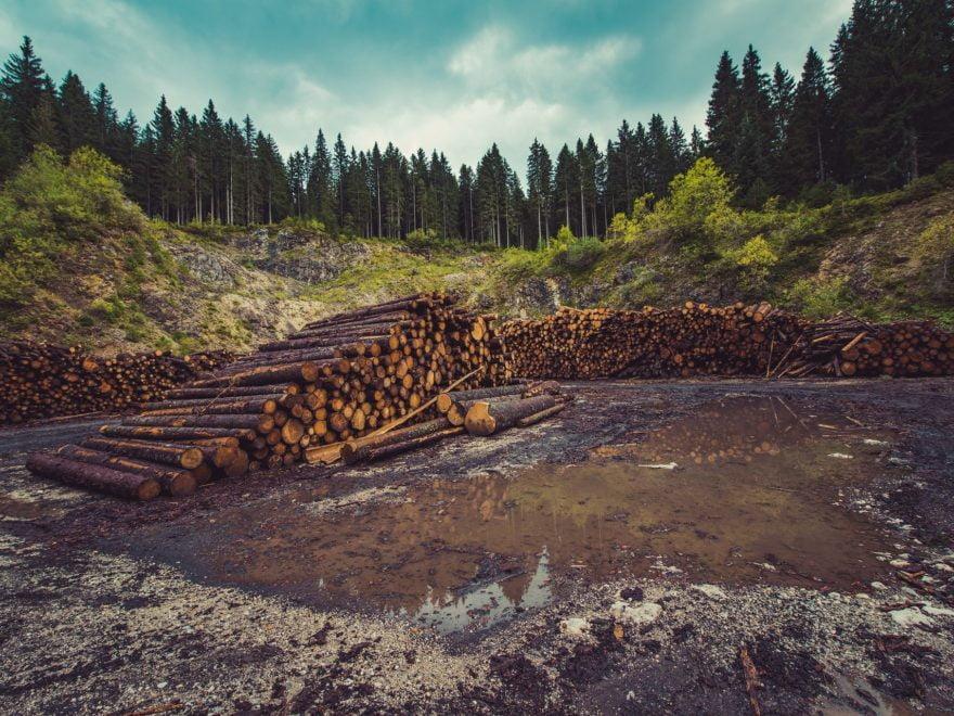 Holzlieferverträge – und das europäische Beihilferecht