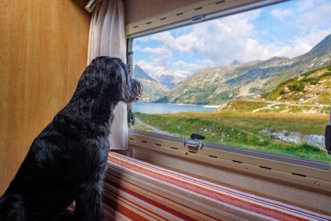 Corona - und keine rechtmäßige Schließung eines Hundesalons