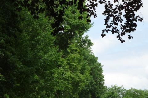 Auf dem Harzer-Hexen-Stieg vom Baum getroffen