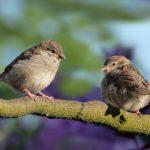 Vogelschutzfolien für die Spiegelfassade