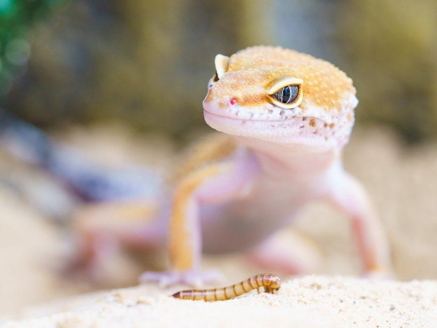Nahrungsergänzungsmittel - für Menschen oder für Geckos