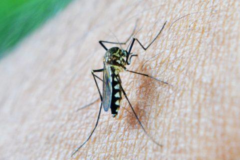 Kein Abschiebungsverbot bei Malariagefahr