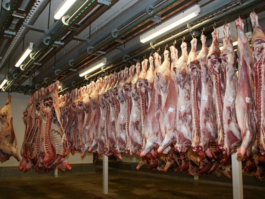 Das Lebensmittel- und Futtermittelgesetzbuch - und seine Blankettstrafvorschriften