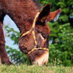 Haltungsverbot für Lama, Esel, Pony