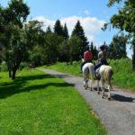 Sorgfaltspflicht beim Überholen eines Pferdes