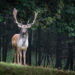 Die jagdrechtliche Befriedung - und der laufende Jagdpachtvertrag